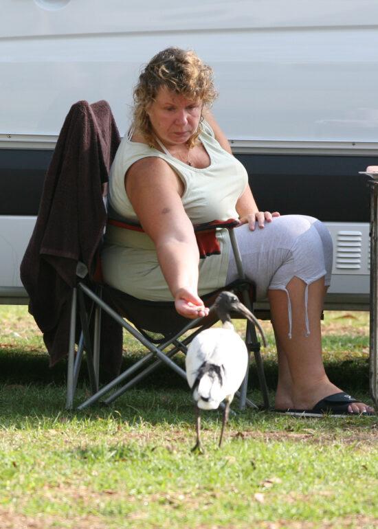 Ontbijt met ibissen op de camping in Hot Springs