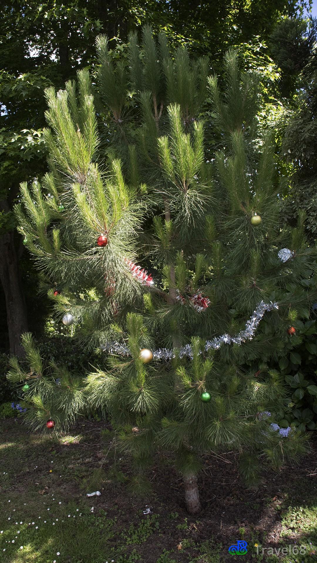 Onderweg kwamen we deze mooie versierde kerstboom tegen