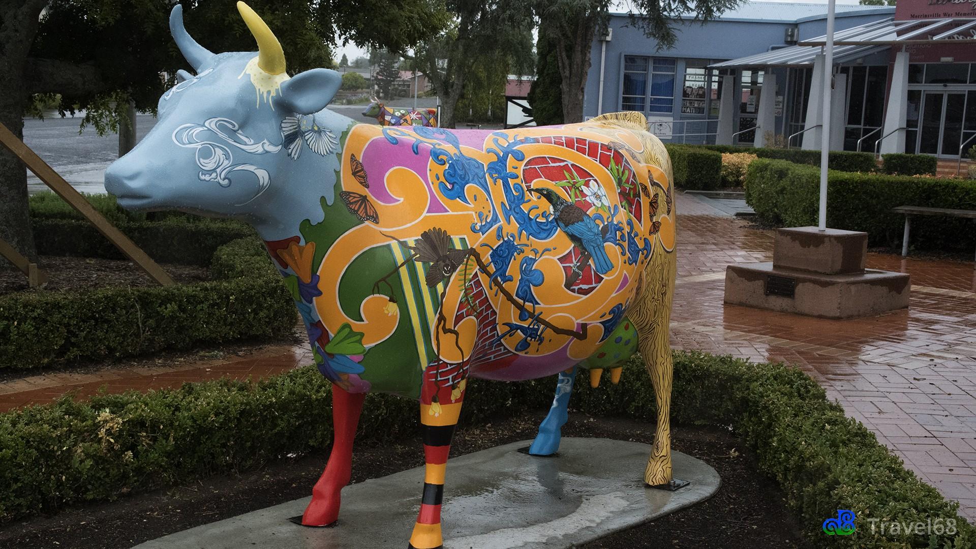 Dit is de kiwiana koe.