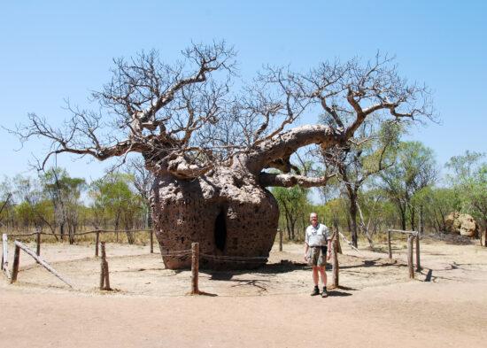 De Boab Prison tree: 1500 jaar oud waar in de 19e eeuw gevangenen 's nachts in werden opgesloten, tijdens hun transport.