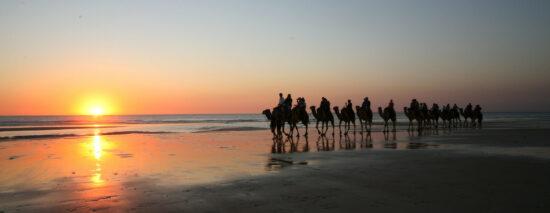 De kamelen-intocht