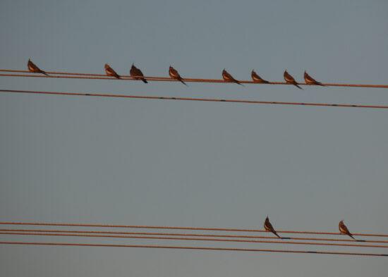 Vogels zitten op de lijn