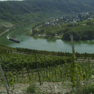 Smalle weg langs de wijngaarden op weg naar de camping