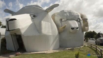 In het plaatsje Tirau kom je deze grote schaap tegen